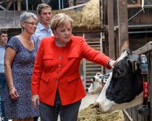 """德国总理默克尔""""慰问""""奶牛"""