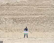 因为上千只燕子在这工地筑巢,施工停了