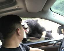 八达岭动物园游客开窗投食被熊咬伤