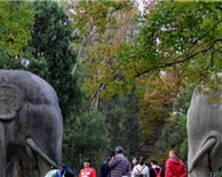 赏秋景 | 南京石像路色彩斑斓 秋韵十足(组图)
