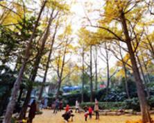 这是雨后的南京清凉山银杏谷 就问你美不美(组图)