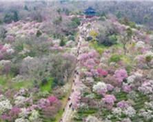 春暖花开迎客来(组图)