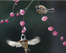 图片特刊 | 春之吻 一组图带你感受春的芬芳