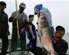 太湖正式开捕 大鱼满仓渔民喜迎丰收(组图)