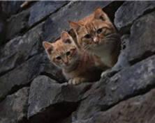 注意!猫出没(组图)