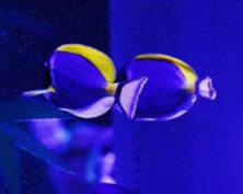 """多莉来了!""""海洋武士""""现身南京海底世界(组图)"""