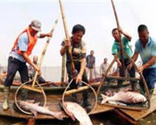 长荡湖封湖20个月后首捕收网 38斤大鱼过万元拍出