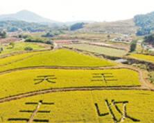 航拍江苏句容美丽乡村 丰收图景如诗如画