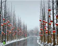 省园博园迎2019年初雪 落雪成诗