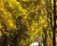 秋日限量版美景!南京清凉山银杏开始黄了(组图)
