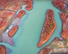 江苏盱眙天泉湖畔红杉连片 构成独特景观画卷