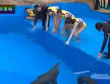 华姐佳丽与海豚嬉戏