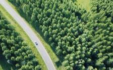 河北允许限定范围内适度开展森林游