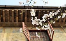文化部将与国家旅游局合并 武大赏樱开放网上免费预约通道 | 一周旅讯