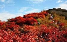 北京推出21处彩叶观赏景区 彩叶树将逐步进入最佳观赏期