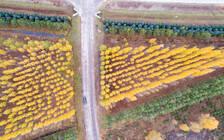 北大荒里走出的旅游名镇 建三江打造现代化大农业旅游区