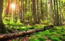 2018年全国森林旅游游客量预计达16亿人次