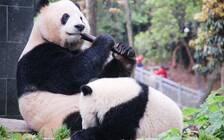 中国大熊猫国家公园主题公园落户都江堰 规划面积7000亩
