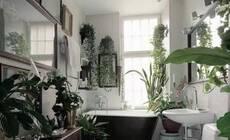 在家为绿植留一个小角落 回馈给你生机盎然