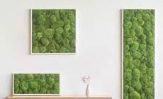 想要生机勃勃又没有空间?植物还可以这样上墙!