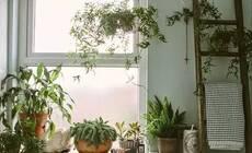 小角落也有大作为!1㎡的空间就是一个花园!