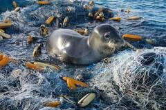 被海洋垃圾困住的小动物