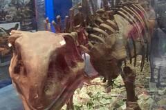 恐龙骨架柜成许愿池