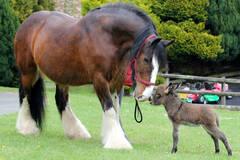 驴宝宝和骏马的友情