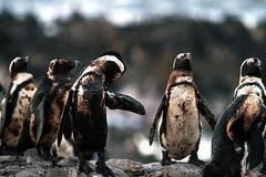 一组动物受害的照片