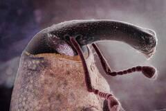 微观摄影下的昆虫特写