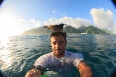 冲浪者头发竟被鸟儿当做鸟巢