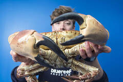 可夹碎人手腕的巨型螃蟹
