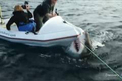 6米长大白鲨突袭小船画面