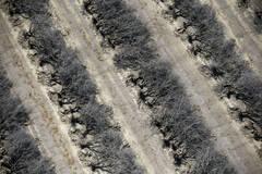 美国大旱灾