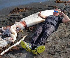 巨型鱿鱼现新西兰海滩