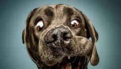 为什么说狗狗都是吃货?魔性表情说明一切