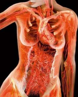 另类之美:x线下的美女人体艺术