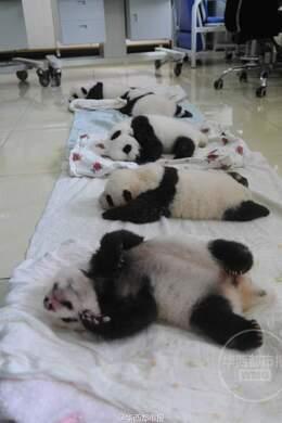 2015级大熊猫幼儿园开园啦!