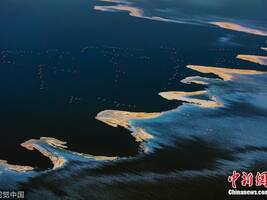 大自然在这里打翻了颜料盘 航拍火烈鸟飞掠盐湖