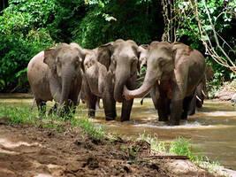追象廿年:象会记住伤害过它的物种,最大天敌是人