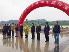 助力长江大保护 500尾中华鲟放归长江
