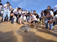 影帝刘烨现身三亚 世界海龟日放流海龟为水生野生动物代言