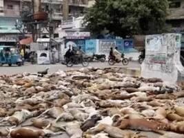 巴基斯坦街头惊现狗狗尸体,数量繁多吓坏路人,得知真相愤怒不已