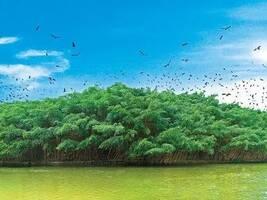 """为保护江门""""小鸟天堂""""3万小鸟,江湛铁路多花了1.87亿"""
