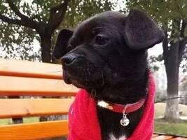 收养一只流浪狗,为它准备了食物和窝,它居然哭了……