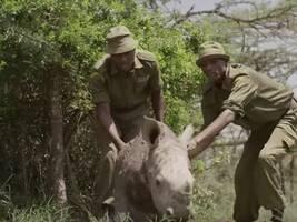 非洲巡护员系列故事|守护最后的北方白犀牛