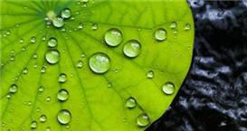 科学家开发出滴水不沾新材料