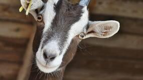 下面给大家介绍,动物界的迷惑行为大赏