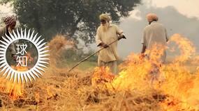 每年春天印度农村都会这样的神秘现象…… | 地球知识局
