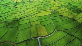 遏制粮油食品安全的源头污染至关重要